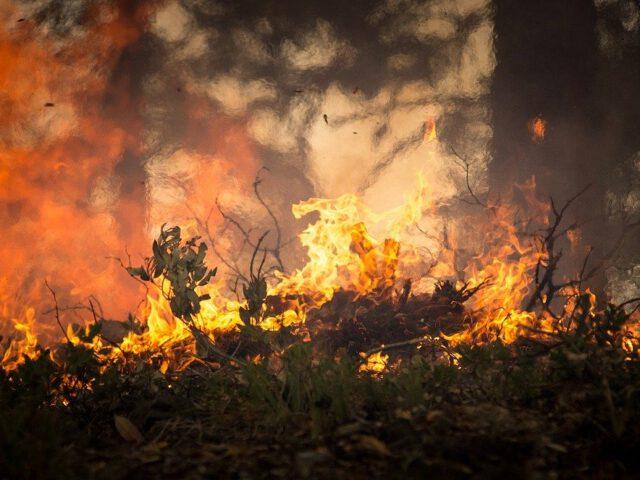 Feuer, Brand, Waldbrand